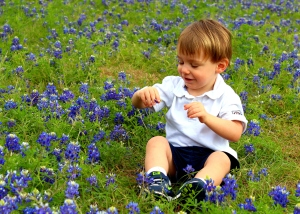 Greer Blue Bonnets
