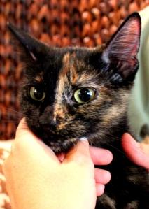cat named Sybil